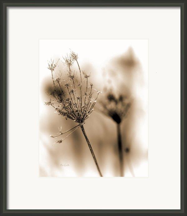 Winter Flowers Ii Framed Print By Bob Orsillo