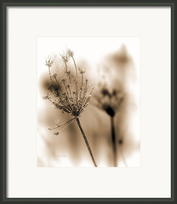 Winter Flowers Ii Framed Print By Bob Orsillo