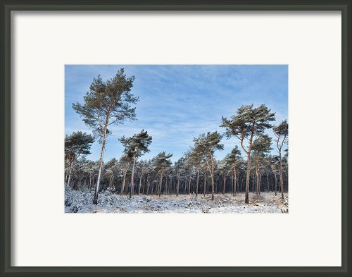 Winter Forest Covered With Snow Framed Print By Dirk Ercken