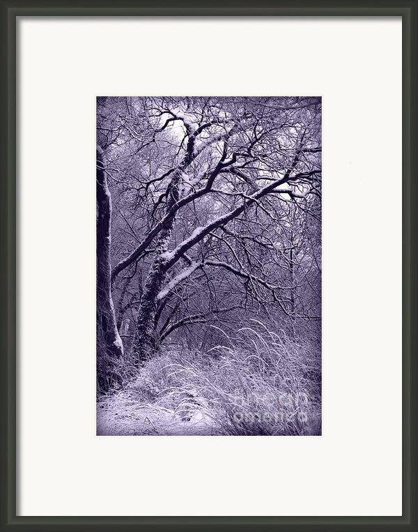 Winter In Purple Framed Print By Carol Groenen