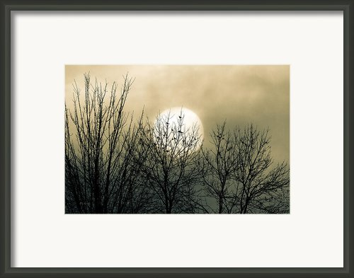 Winter Into Spring Framed Print By Bob Orsillo