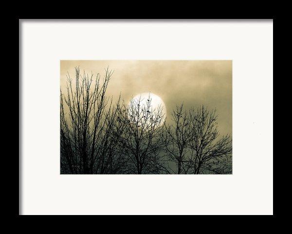 Winter Into Spring Framed Print By Bob Orsillo