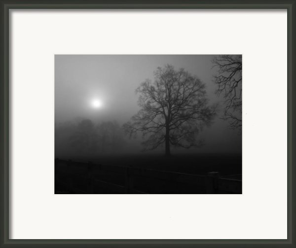 Winter Oak In Fog Framed Print By Deborah Smith