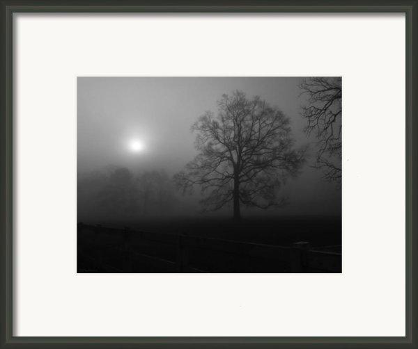 Winter Oak In Fog Framed Print By Deborah Smith
