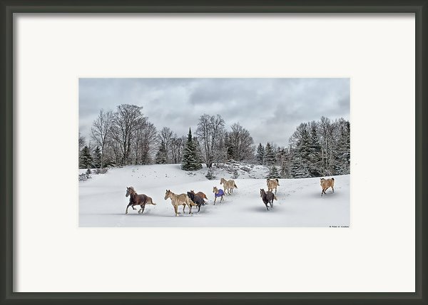 Winter Run Framed Print By Peter Lindsay