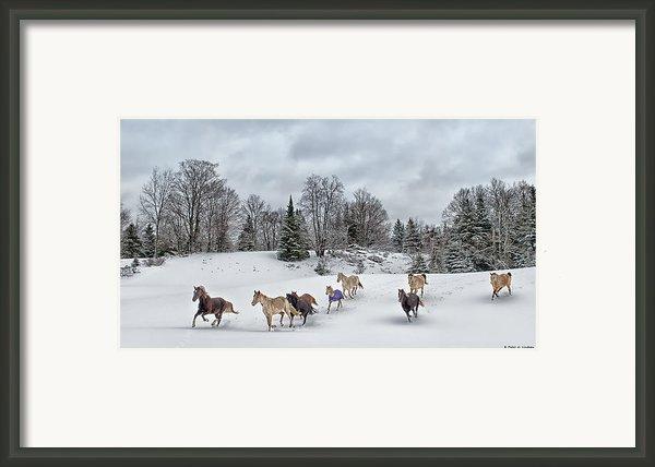 Winter Run Framed Print By Peter Lindsay