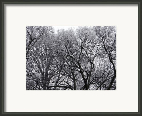 Winter Storm Framed Print By Vicki Tinnon