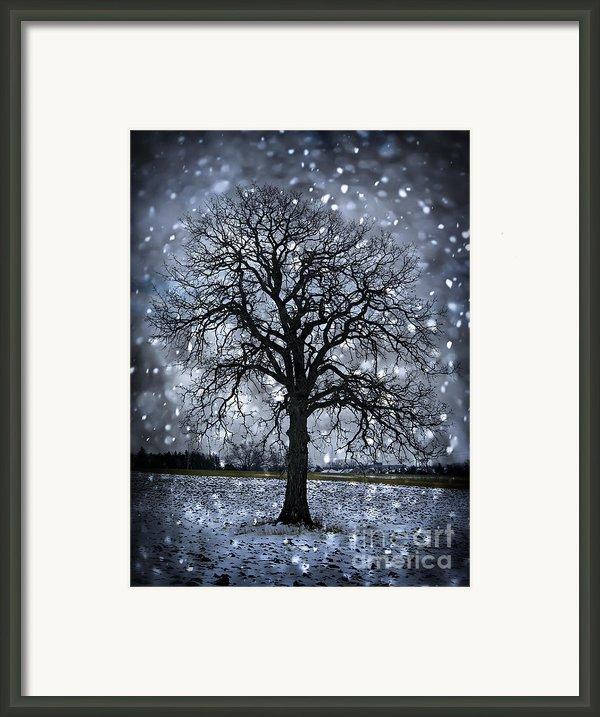 Winter Tree In Snowfall Framed Print By Elena Elisseeva