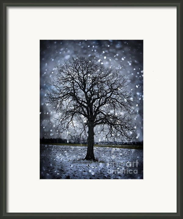 Winter Tree In Snowfall Framed Print By Elena Elisseeva