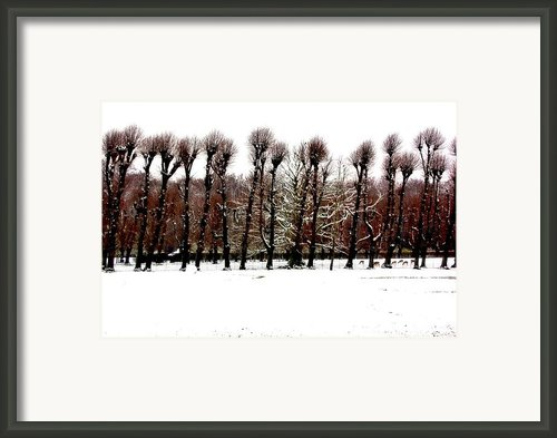 Winter Tree Line 2 Framed Print By Xoanxo Cespon