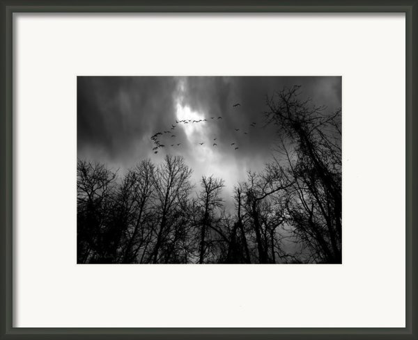 Winter Trees Moving Sky Framed Print By Bob Orsillo
