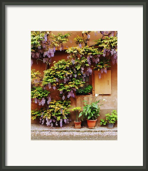 Wisteria On Home In Zellenberg 4 Framed Print By Greg Matchick