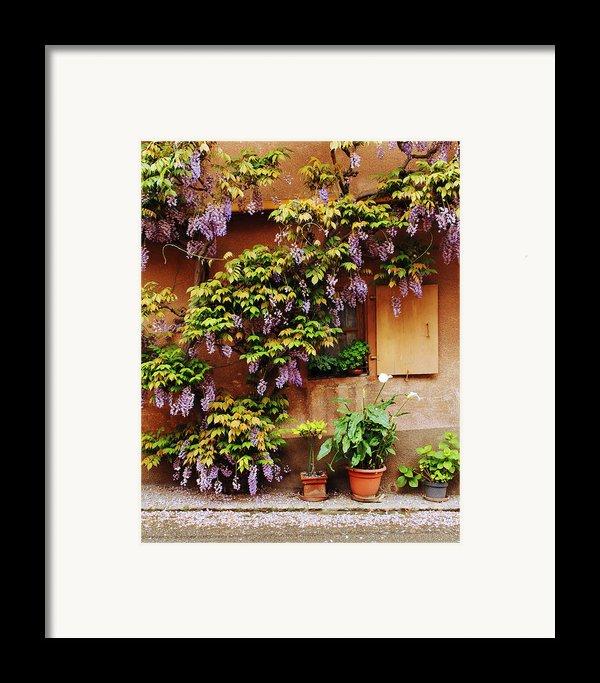 Wisteria On Home In Zellenberg 4 Framed Print By Greg Matchick