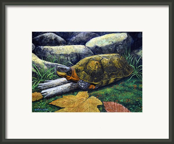 Wood Turtle Framed Print By Frank Wilson