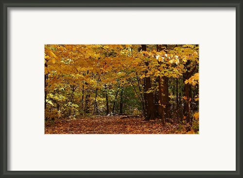 Woodland Path Framed Print By Bruce Bley