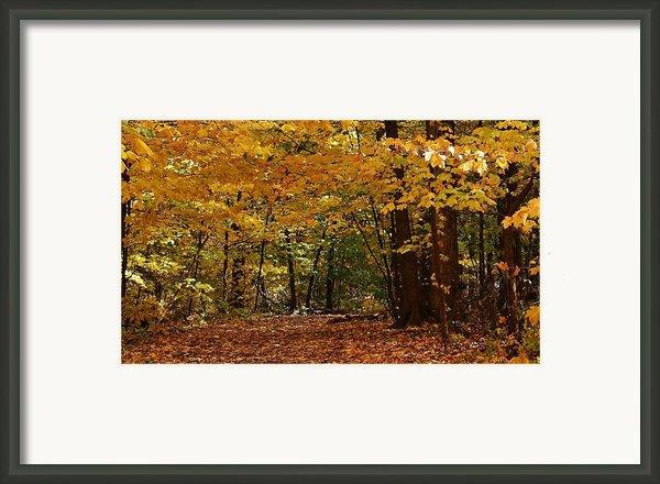 Woodland Path Framed Print By Bruce Bley