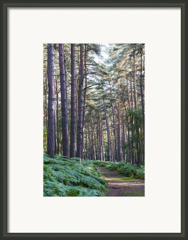 Woodland Path Framed Print By David Isaacson