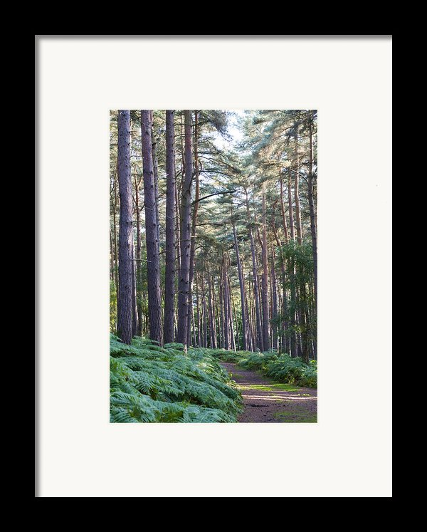 Woodland Path Framed Print By David Isaacson