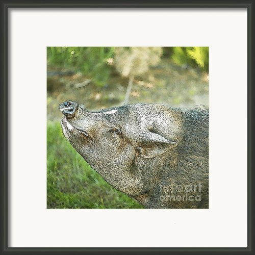 Woody Smiles Framed Print By Author And Photographer Laura Wrede