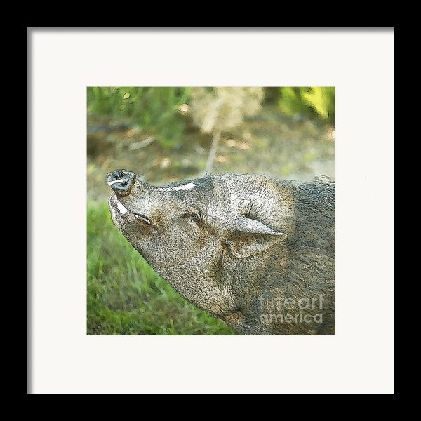 Woody Smiles Framed Print By Artist And Photographer Laura Wrede