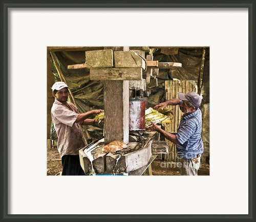 Working Hard For Sugar Framed Print By Heiko Koehrer-wagner