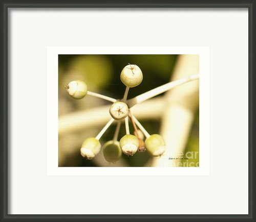 Yellow Berries Framed Print By Author And Photographer Laura Wrede