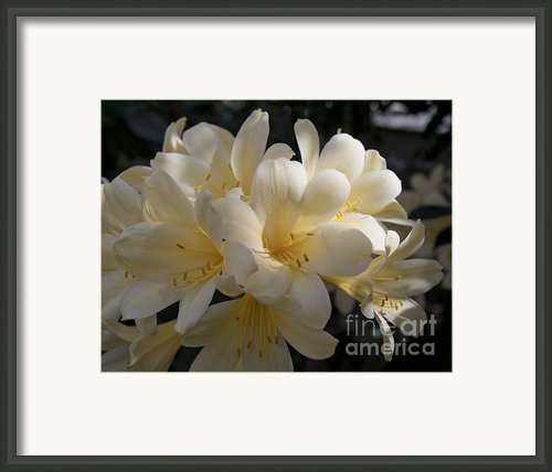 Yellow Clivia 1004 Framed Print By Terri Winkler