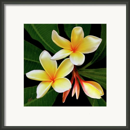 Yellow Plumeria Framed Print By Ben And Raisa Gertsberg