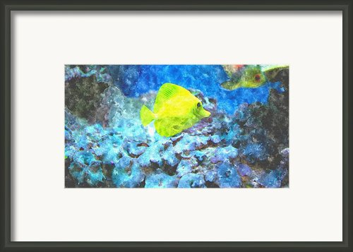 Yellow Tang Of Hawaii Framed Print By Rosemarie E Seppala