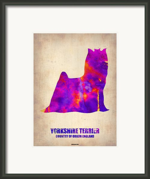 Yorkshire Terrier Poster Framed Print By Irina  March