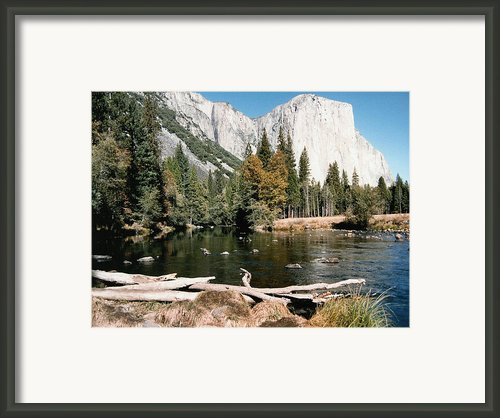 Yosemite In October Framed Print By Barbara Snyder