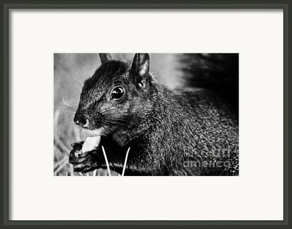 Yummy Nuts Framed Print By Fatemeh Azadbakht