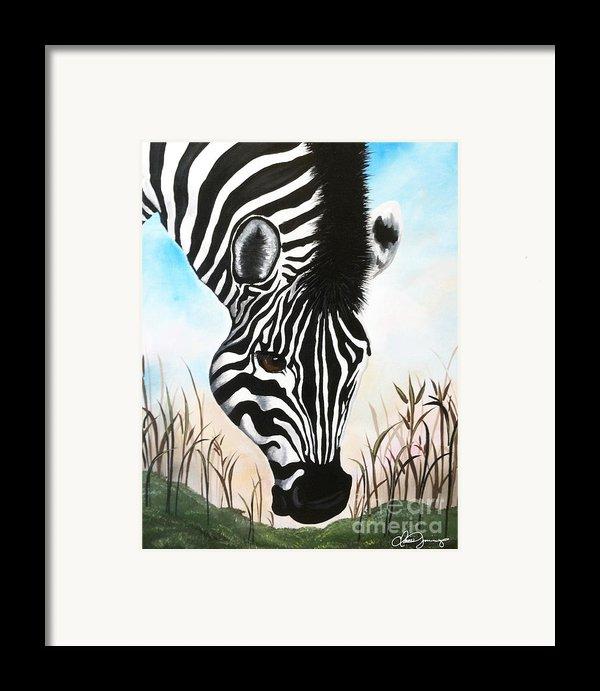 Zebra Framed Print By Danise Abbott