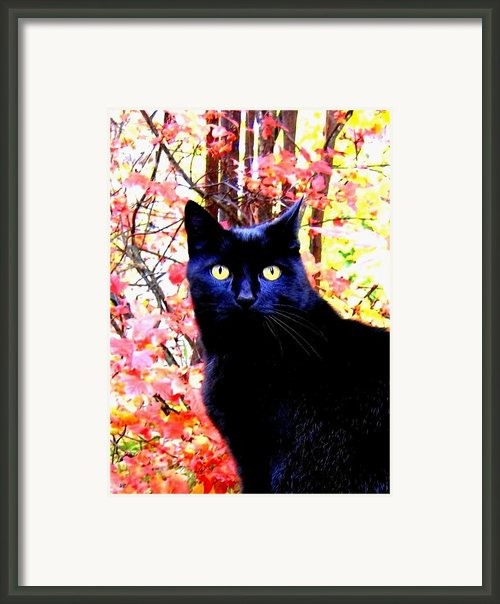 Ziggy Framed Print By Will Borden