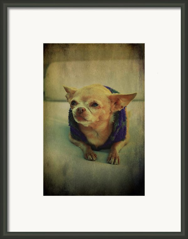 Zozo Framed Print By Laurie Search