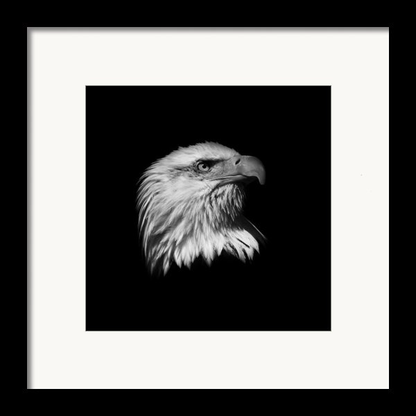 Black And White American Eagle Framed Print By Steve Mckinzie