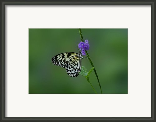 Butterfly On Flower  Framed Print By Sandy Keeton