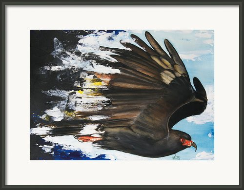 Everglades Snail Kite Framed Print By Anthony Burks