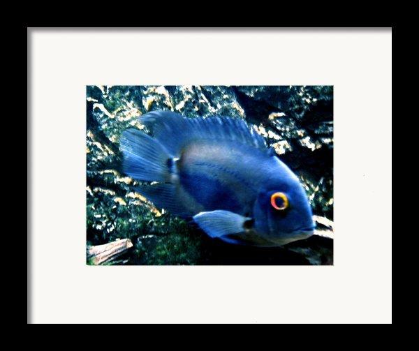 Fish Living In Denmark Framed Print By Colette V Hera  Guggenheim