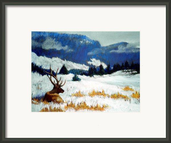 High Country Elk Framed Print By Curt Peifley