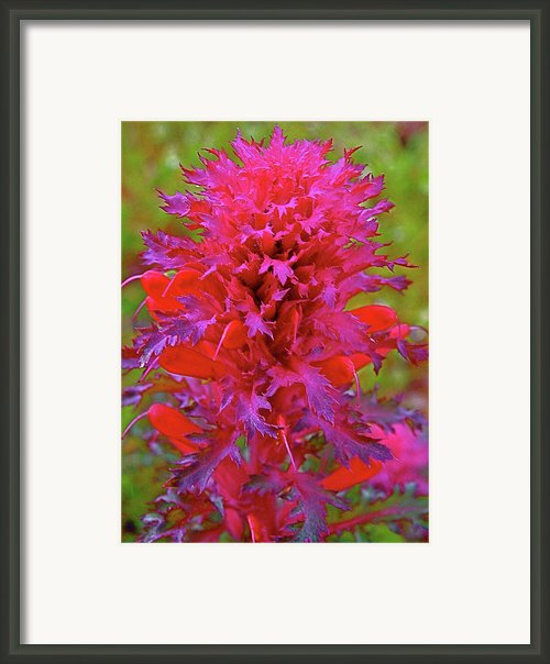 Indian Warrior In Escapees Park Sierra Framed Print By Ruth Hager