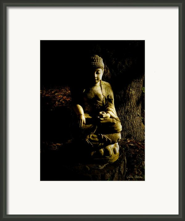 Seeing The Light Framed Print By Sabine Stetson