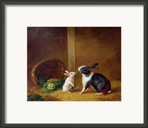 Two Rabbits Framed Print By H Baert