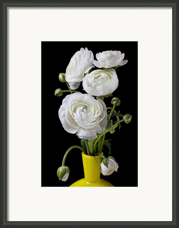 White Ranunculus In Yellow Vase Framed Print By Garry Gay