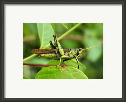 A Hopper Framed Print By Karen M Scovill