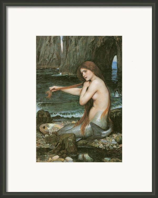 A Mermaid Framed Print By John William Waterhouse