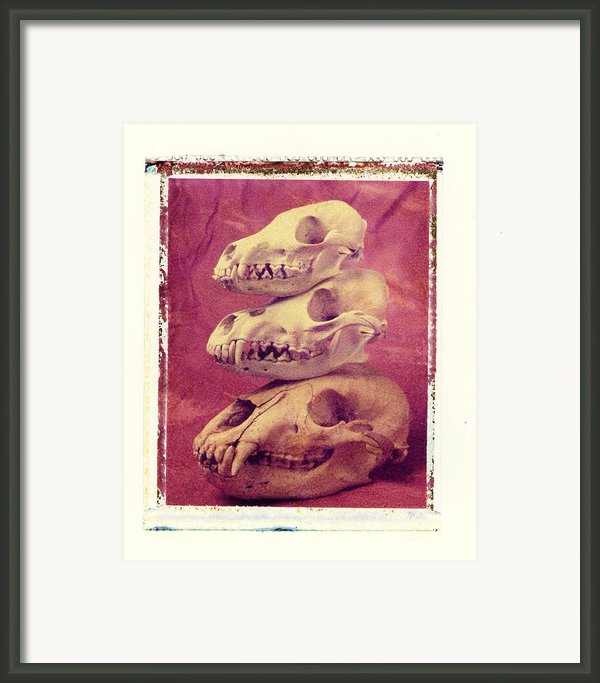 Animal Skulls Framed Print By Garry Gay