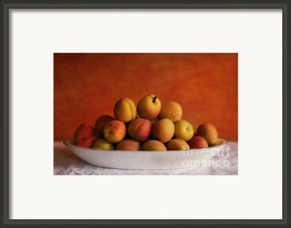 Apricot Delight Framed Print By Priska Wettstein