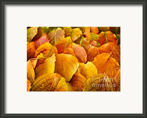 Autumn Leaves  Framed Print By Elena Elisseeva