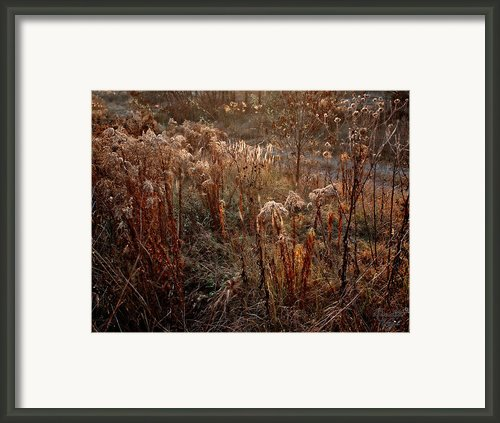 Autumnal Framed Print By Renata Vogl